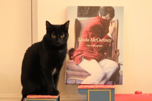 chat imprimante,ma chatte est plus belle que la tienne